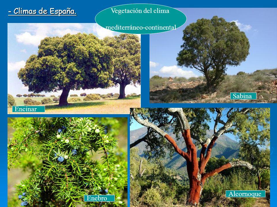 El clima y la vegetaci n de europa y de espa a ppt video for Clima mediterraneo de interior