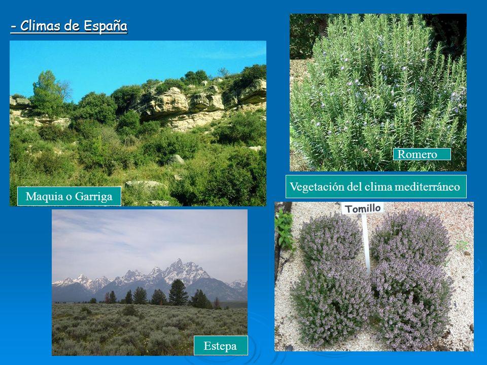 El clima y la vegetaci n de europa y de espa a ppt video for Arboles de hoja perenne para clima continental