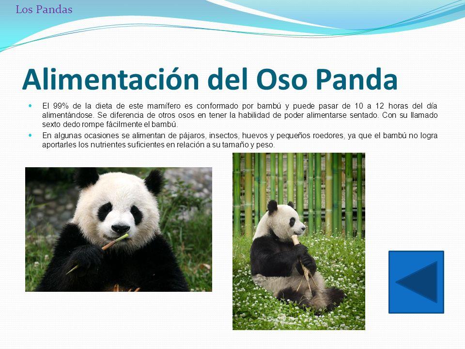 Nombre camila s nchez vidal ppt descargar - Reproduccion del bambu ...