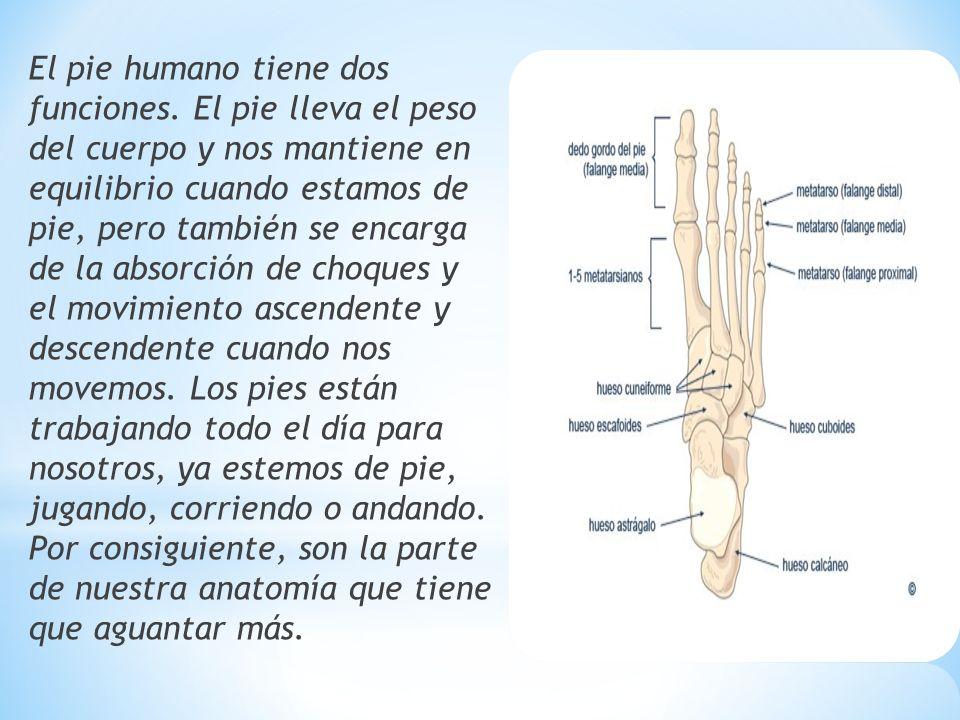 Excepcional Huesos De Los Pies Humanos Ornamento - Anatomía de Las ...