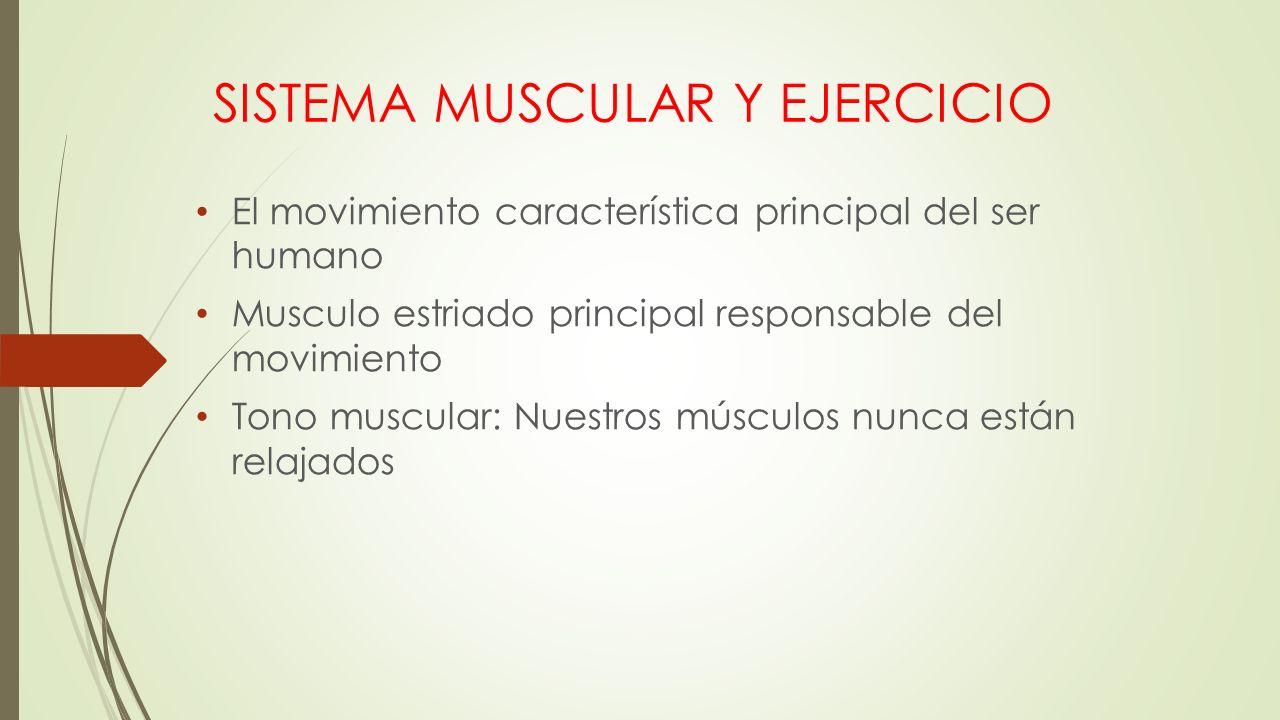 Contemporáneo Anatomía Macroscópica De La Hoja De Revisión Sistema ...