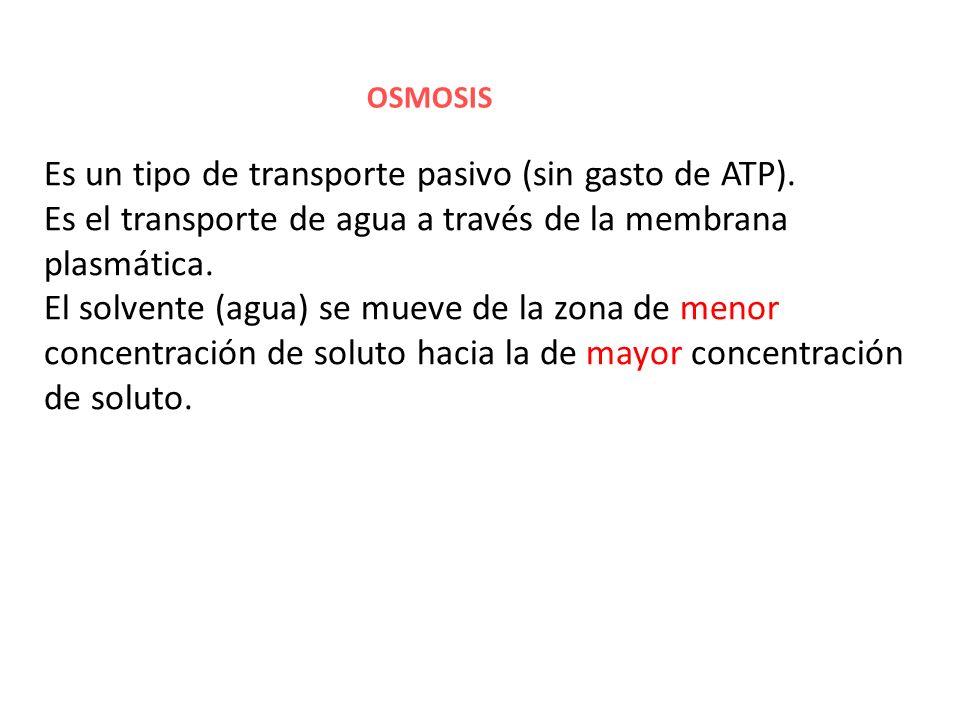 Es un tipo de transporte pasivo (sin gasto de ATP).