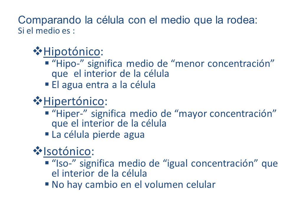 Hipotónico: Hipertónico: Isotónico: