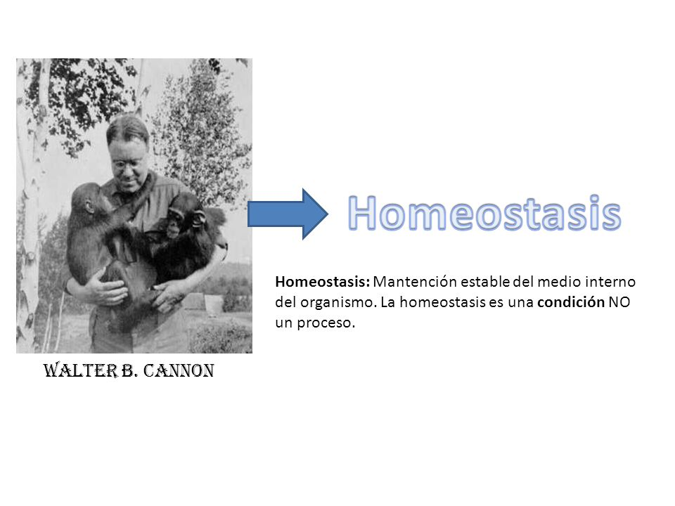 Homeostasis Walter B. Cannon