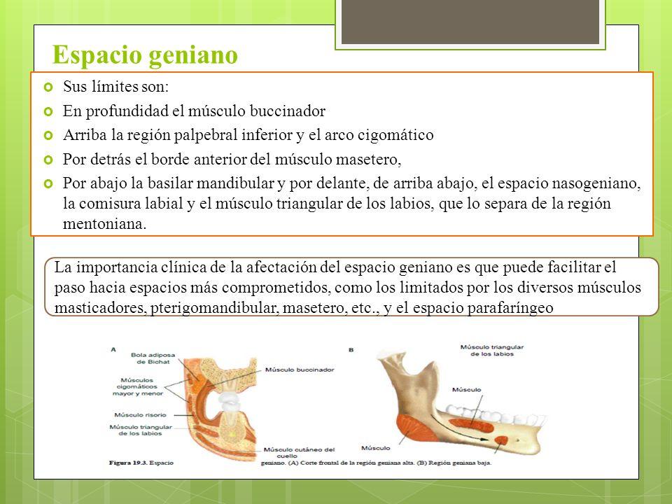 Magnífico Anatomía Espacio Triangular Ideas - Imágenes de Anatomía ...