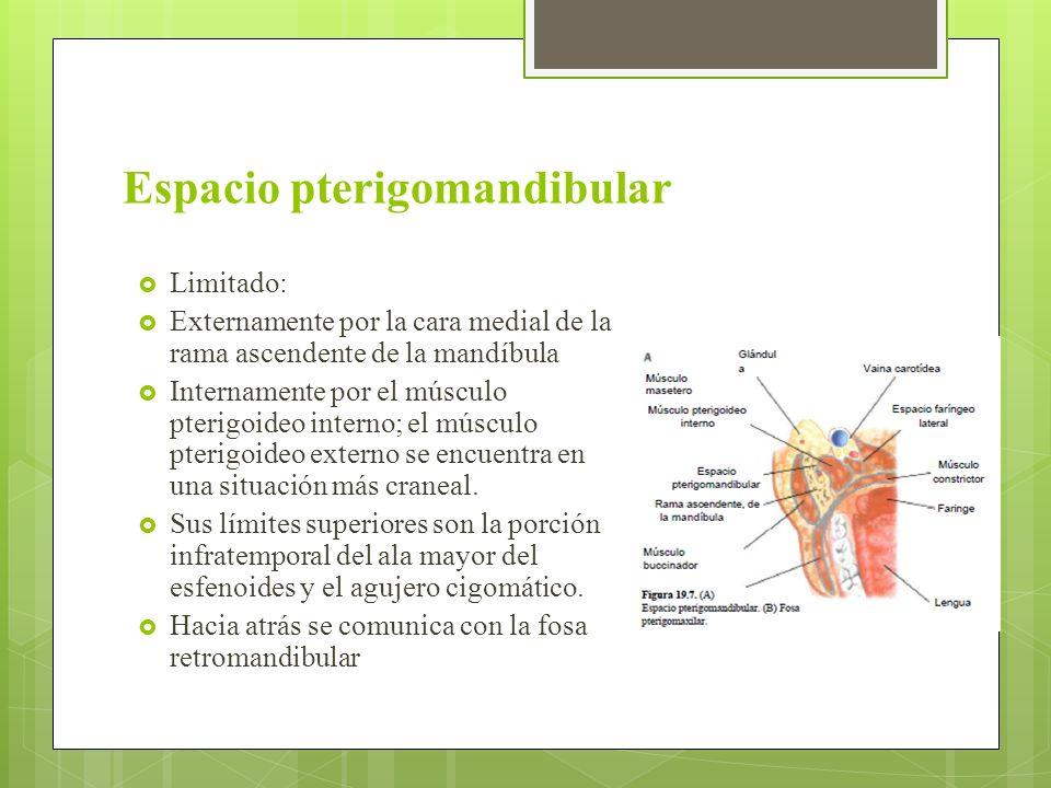Excelente Anatomía Espacio Pterigomandibular Ornamento - Imágenes de ...