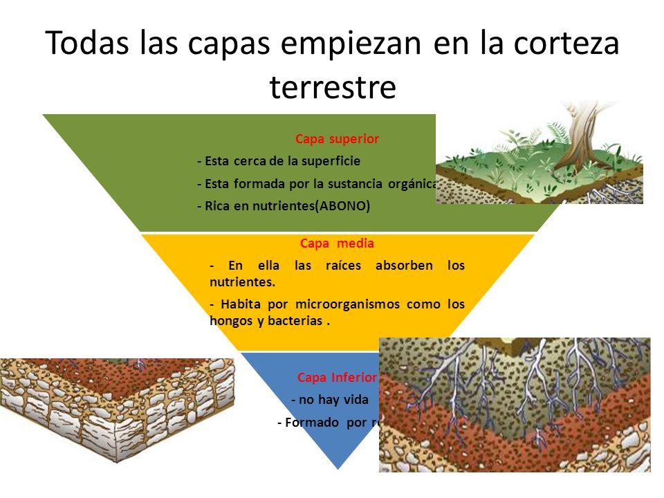Guayaquil 29 de junio del 2011 per odo 1 materia for Como se forma y desarrolla el suelo