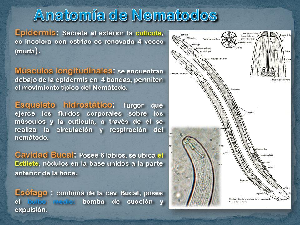 Excepcional Anatomía De Porifera Colección - Anatomía de Las ...