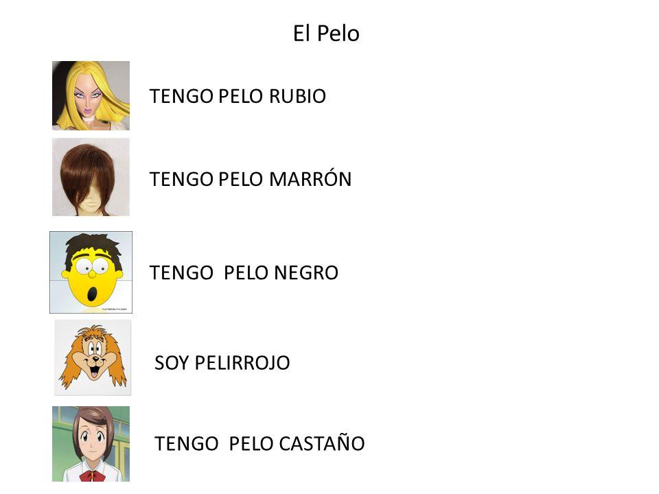 El Pelo TENGO PELO RUBIO TENGO PELO MARRÓN TENGO PELO NEGRO