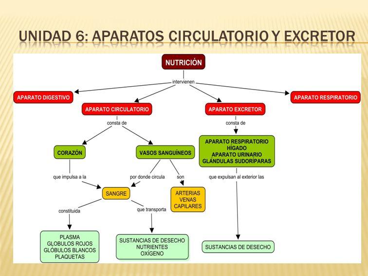 UNIDAD 6: APARATOS CIRCULATORIO Y EXCRETOR