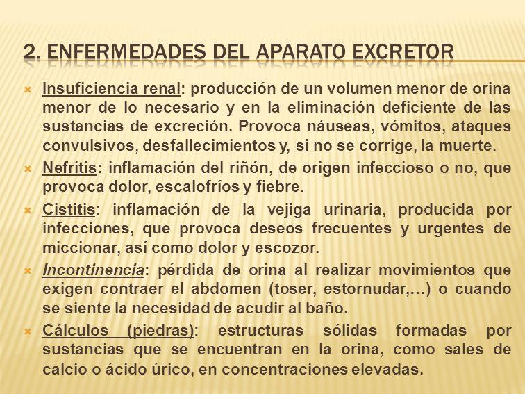 2. Enfermedades del aparato EXCRETOR
