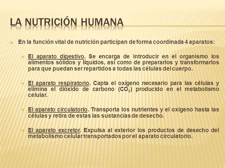 La nutrición humana En la función vital de nutrición participan de forma coordinada 4 aparatos: