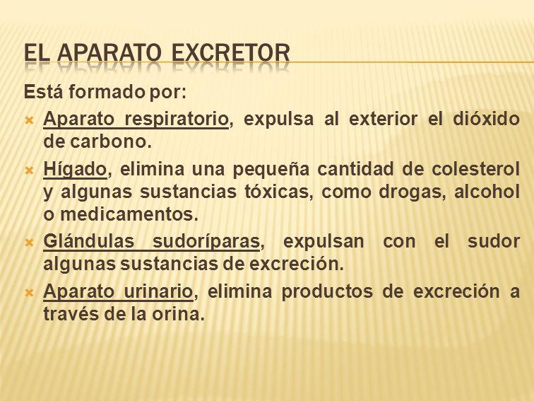 el aparato excretor Está formado por: