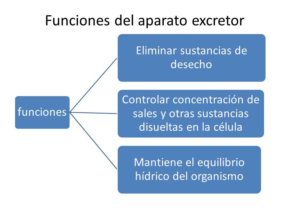 Funciones del aparato excretor