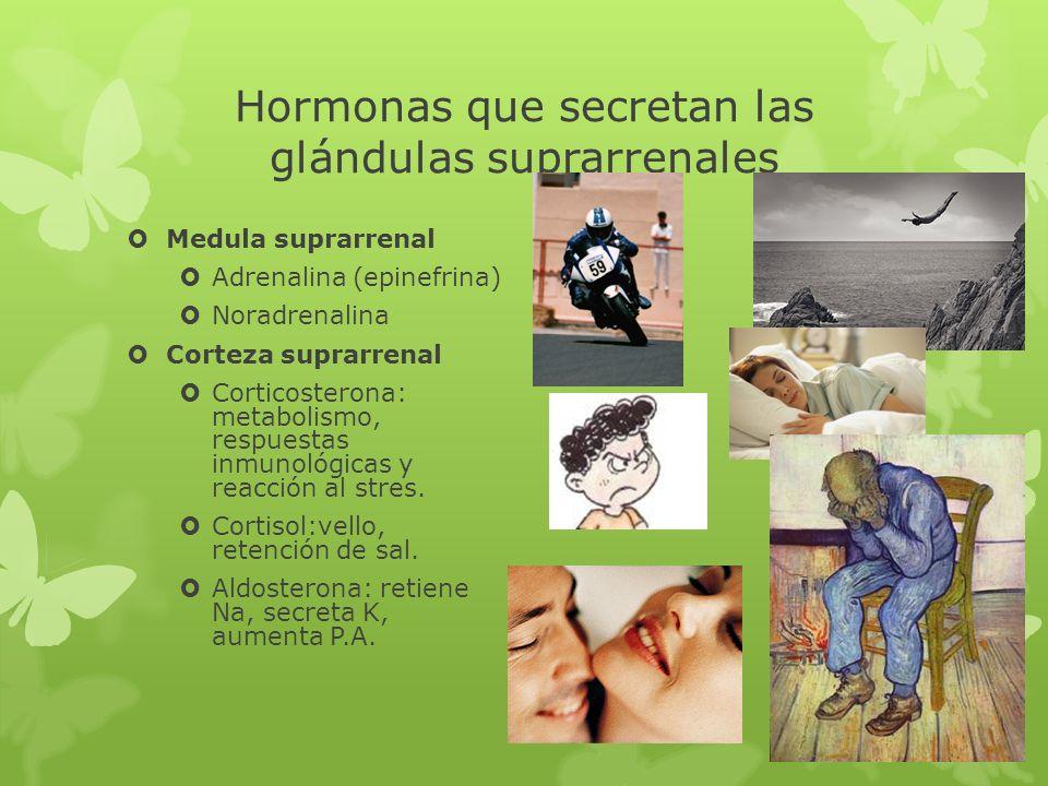 Hormonas que secretan las glándulas suprarrenales