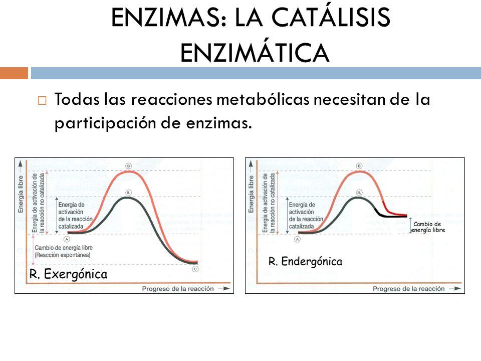 catalisis enzimatica 191cuales son las ecuaciones de michaelis menten ecuacin[editar] en 1913, leonor michaelis (foto de la izquierda) y maud menten (foto de la derecha) desarrollaron esta teoría y propusieron.