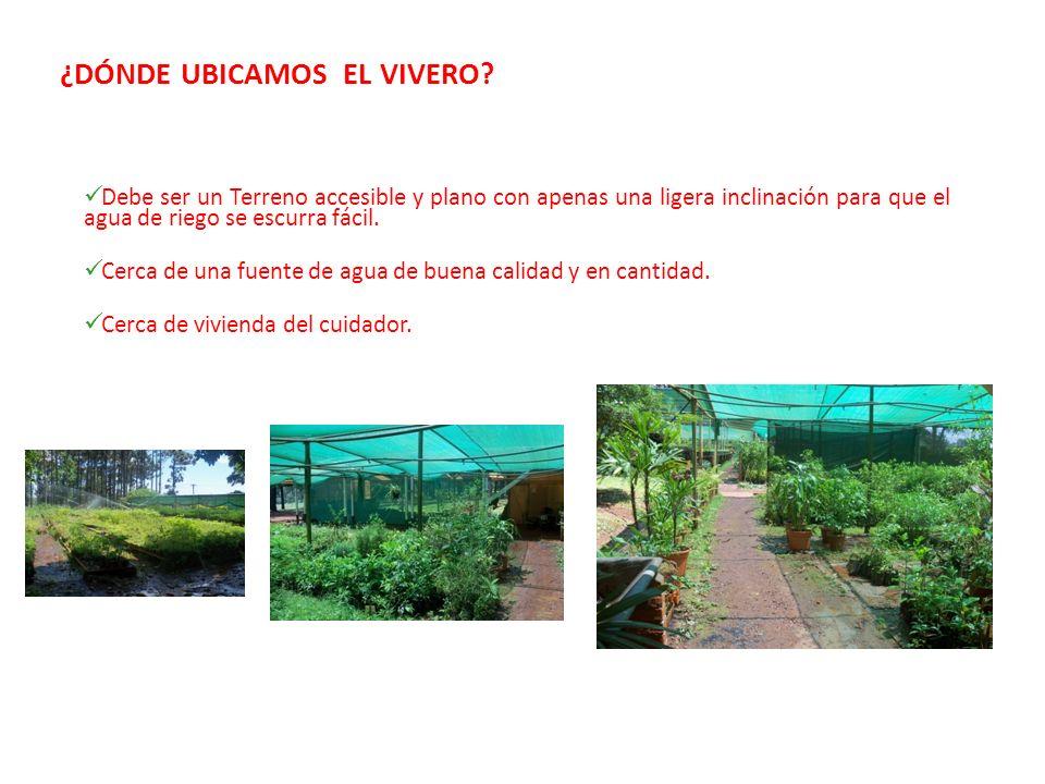 Semillas y vivero forestal de plantas nativas ppt descargar for Vivero plantas nativas
