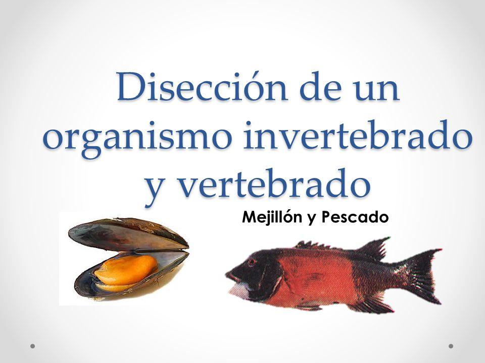 Disección de un organismo invertebrado y vertebrado - ppt video ...