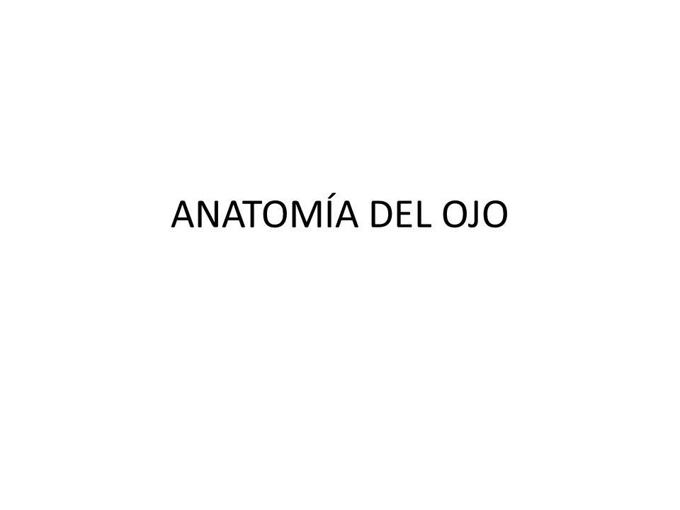 ANATOMÍA DEL OJO. - ppt video online descargar