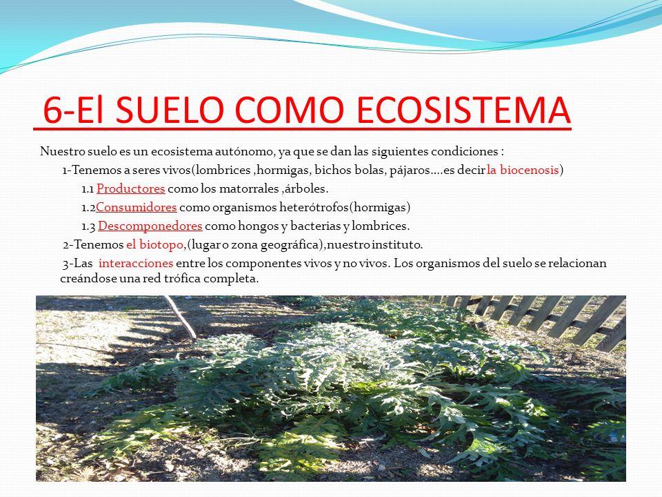 el suelo del huerto del instituto villablanca ppt video
