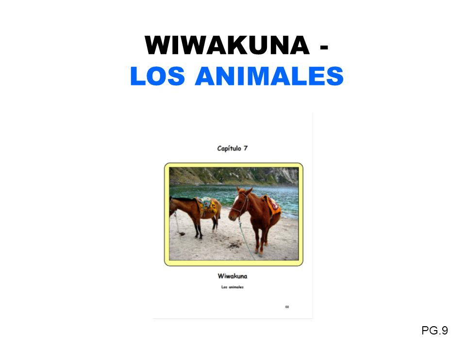 WIWAKUNA - LOS ANIMALES