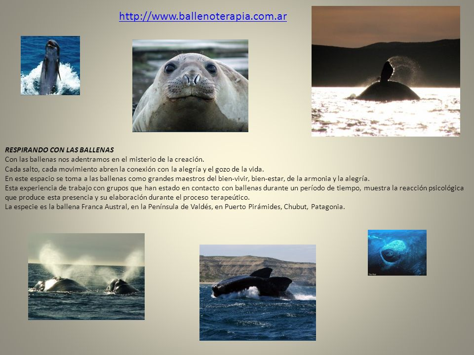 http://www.ballenoterapia.com.ar RESPIRANDO CON LAS BALLENAS