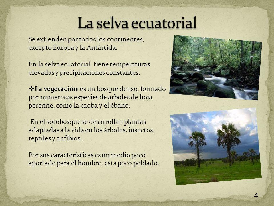 Los paisajes naturales ppt descargar for Arboles de hoja perenne para clima continental