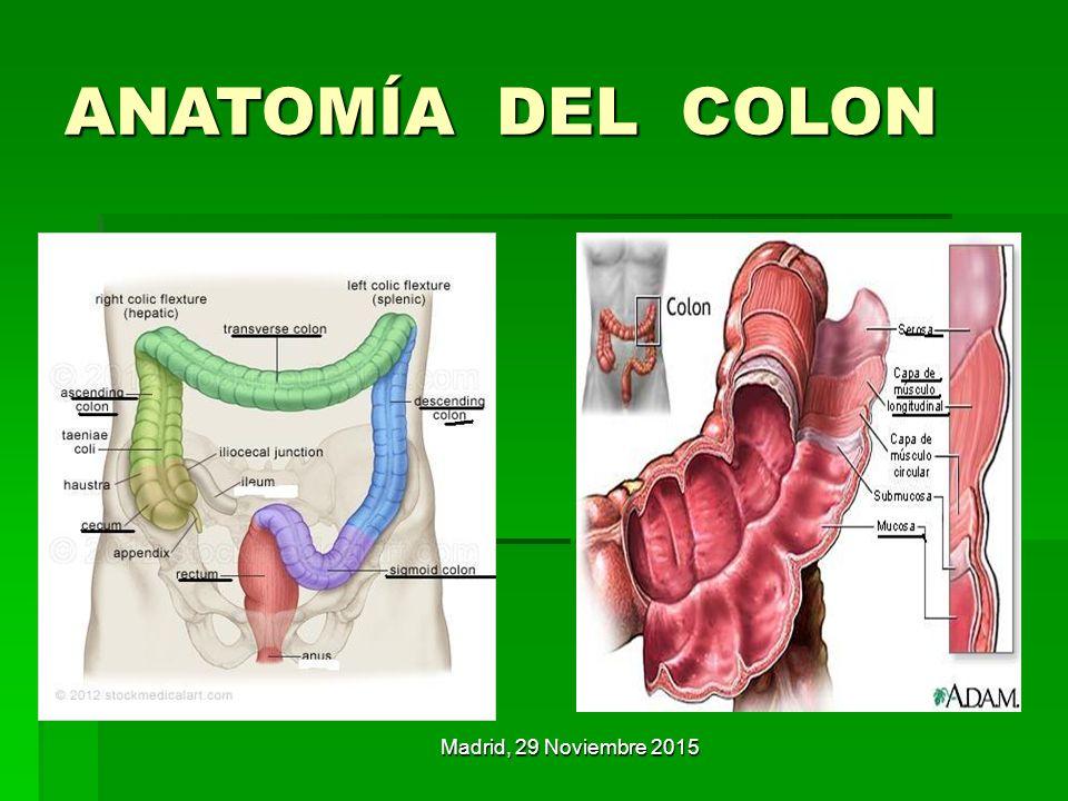 Dorable Gran Anatomía De Colon Bosquejo - Anatomía de Las ...