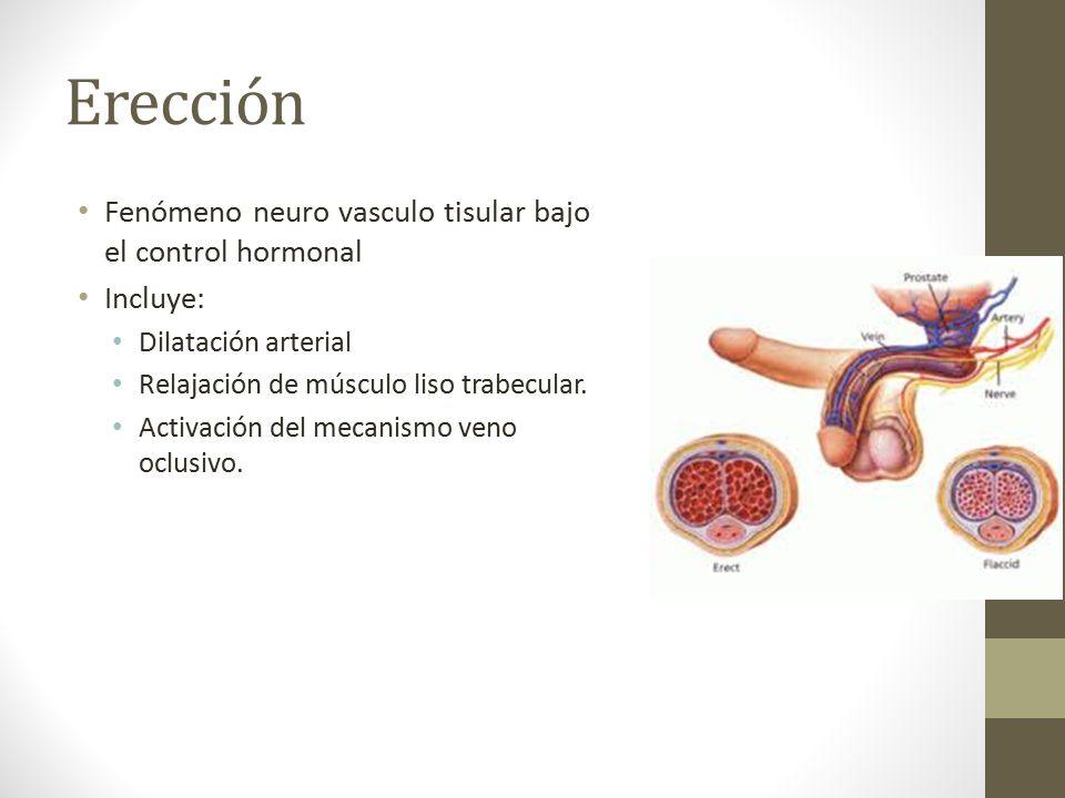 DIAGNÓSTICO Y TRATAMIENTO DE DISFUNCIÓN ERÉCTIL - ppt