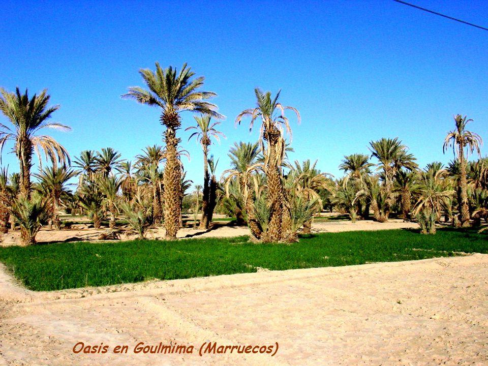 Oasis en Goulmima (Marruecos)