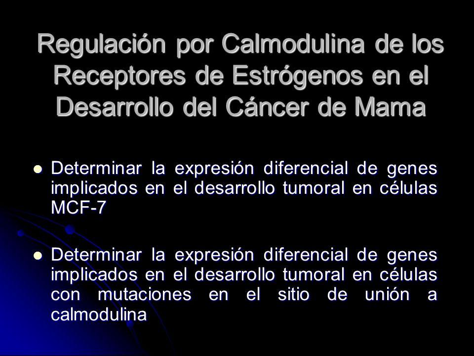Regulación por Calmodulina de los Receptores de Estrógenos en el Desarrollo del Cáncer de Mama