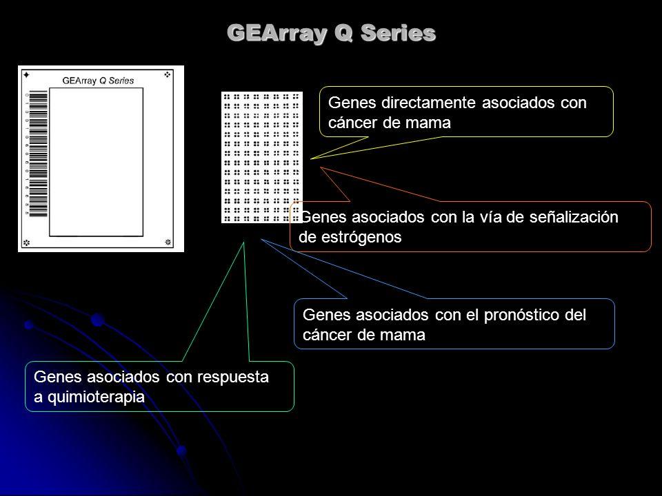 GEArray Q Series Genes directamente asociados con cáncer de mama