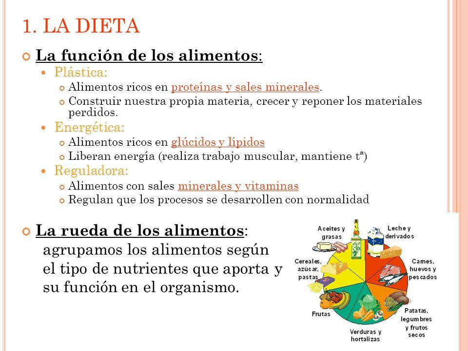 1. LA DIETA La función de los alimentos: La rueda de los alimentos: