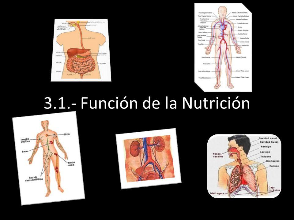 L 3.1.- Función de la Nutrición