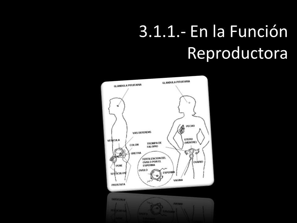 3.1.1.- En la Función Reproductora