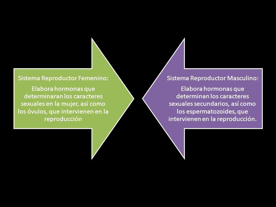 Sistema Reproductor Femenino: