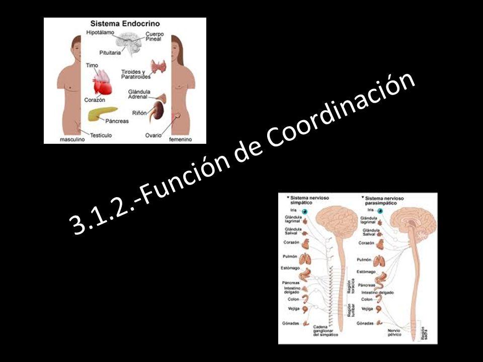 3.1.2.-Función de Coordinación