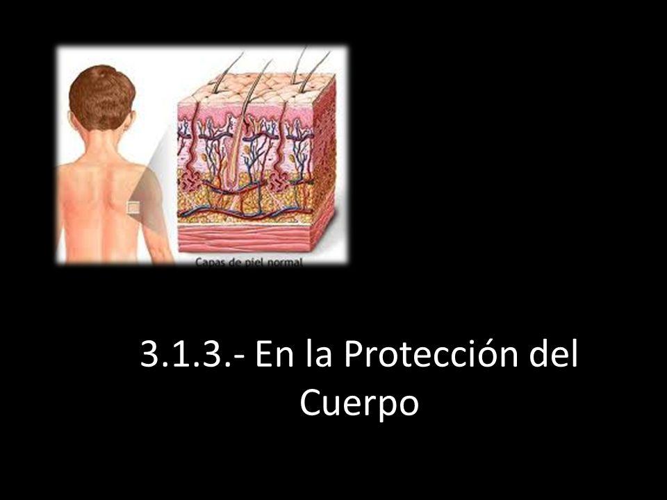 3.1.3.- En la Protección del Cuerpo