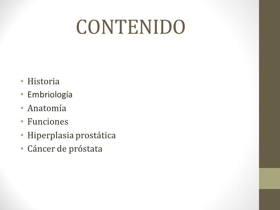 Encantador Anatomía Y Fisiología Del Cáncer De Próstata Galería ...
