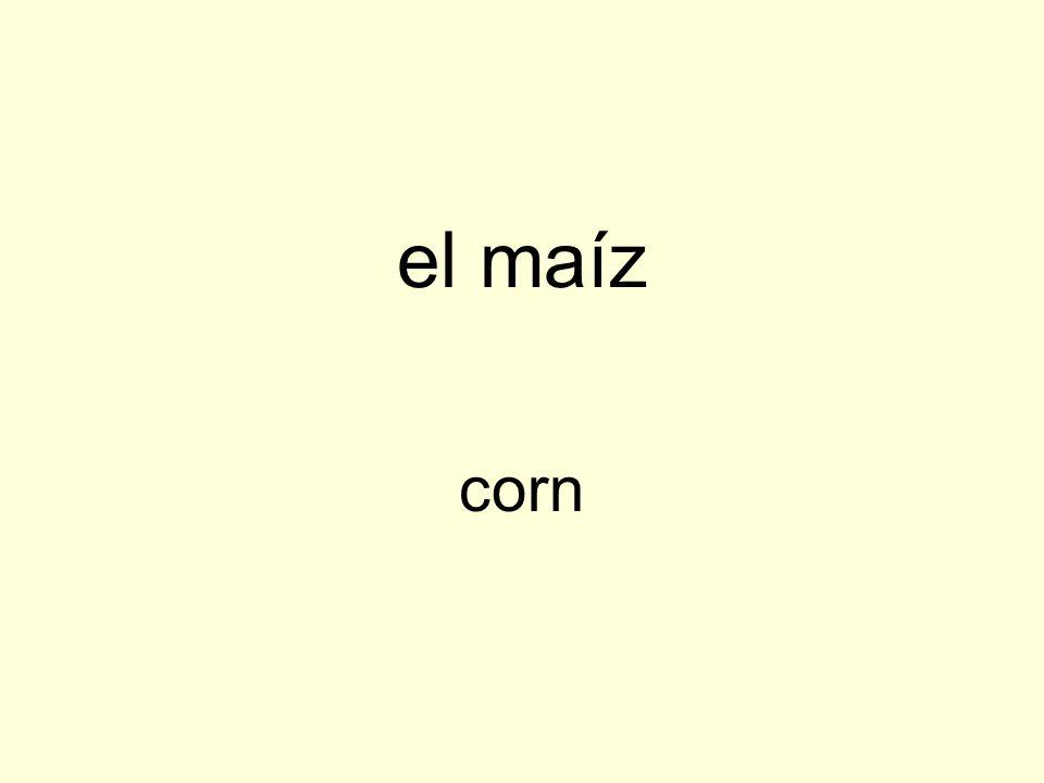 el maíz corn