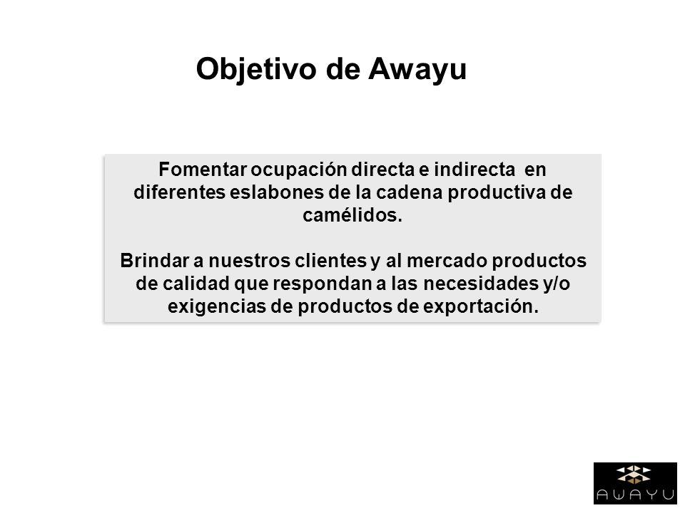 Objetivo de Awayu Fomentar ocupación directa e indirecta en diferentes eslabones de la cadena productiva de camélidos.