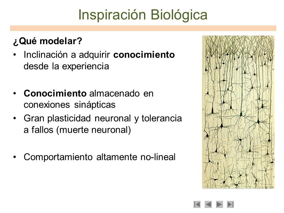 Inspiración Biológica