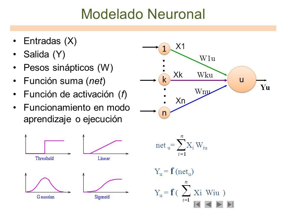 . Modelado Neuronal Entradas (X) Salida (Y) 1 Pesos sinápticos (W)
