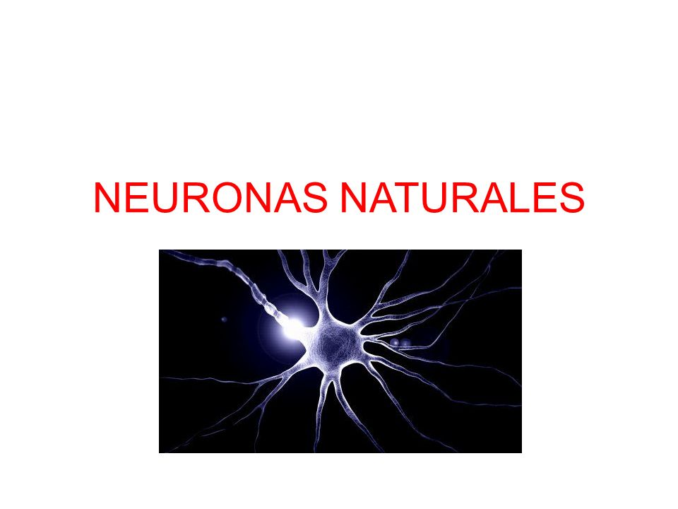 NEURONAS NATURALES