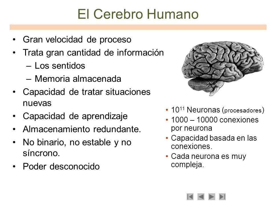El Cerebro Humano Gran velocidad de proceso