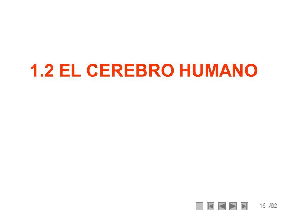 1.2 EL CEREBRO HUMANO