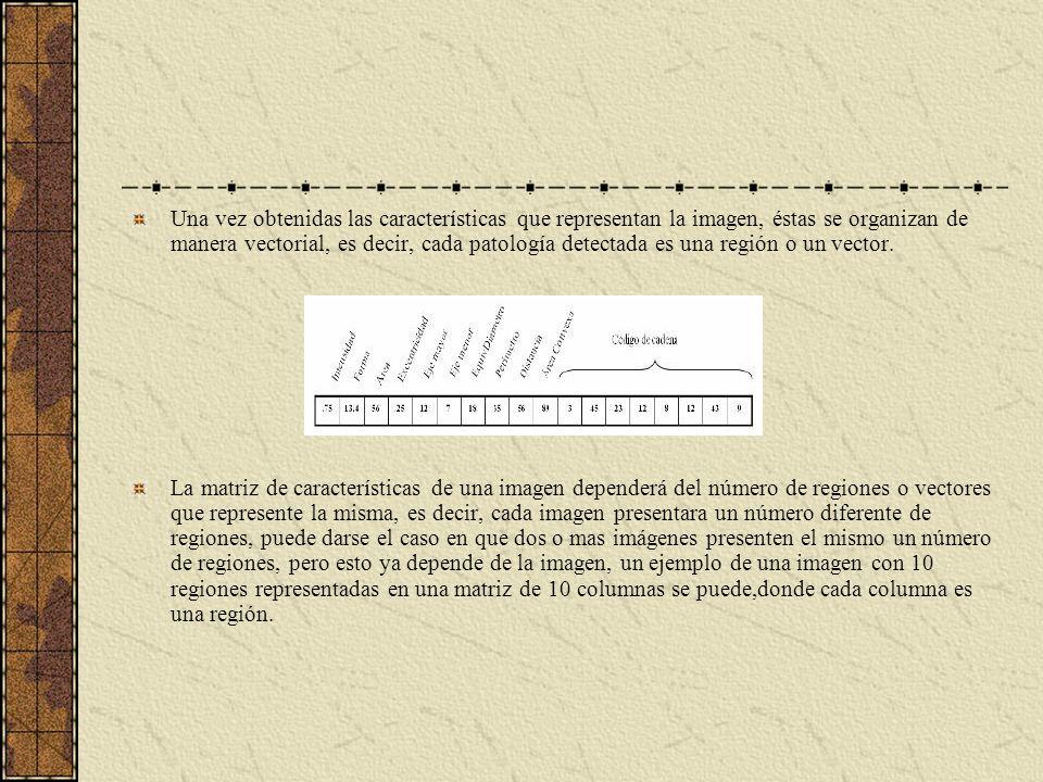 Una vez obtenidas las características que representan la imagen, éstas se organizan de manera vectorial, es decir, cada patología detectada es una región o un vector.