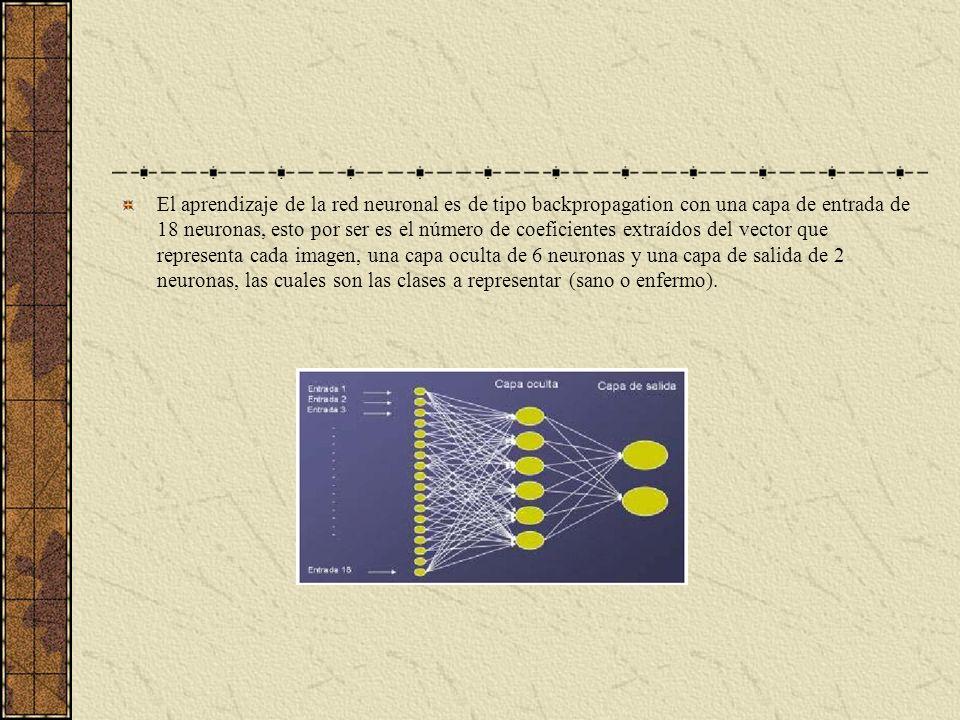 El aprendizaje de la red neuronal es de tipo backpropagation con una capa de entrada de 18 neuronas, esto por ser es el número de coeficientes extraídos del vector que representa cada imagen, una capa oculta de 6 neuronas y una capa de salida de 2 neuronas, las cuales son las clases a representar (sano o enfermo).