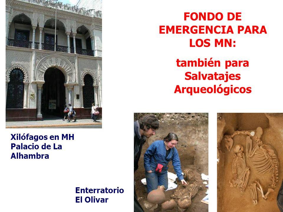 FONDO DE EMERGENCIA PARA LOS MN: también para Salvatajes Arqueológicos