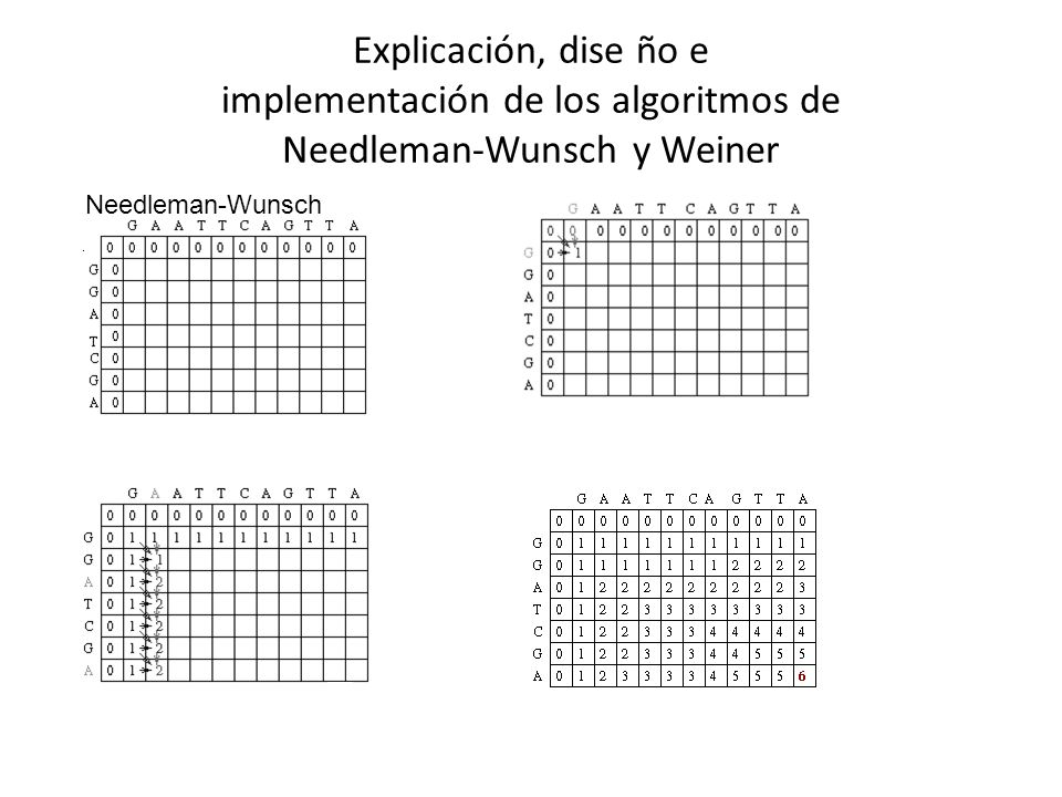 Explicación, dise ño e implementación de los algoritmos de Needleman-Wunsch y Weiner